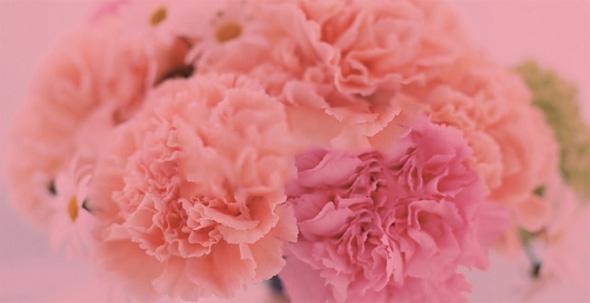 馨雅花卉行业网站设计案例